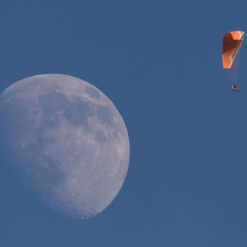 Darrel Over The Moon